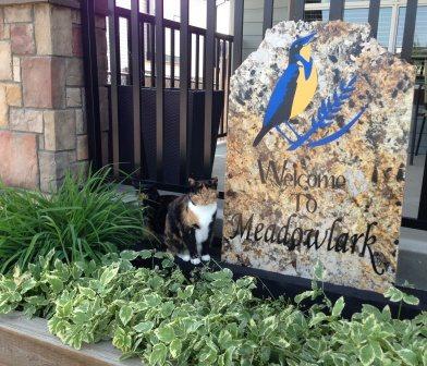 Meadowlark Senior Care Home