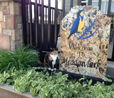 Meadowlark Senior Care Home