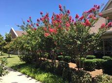 Legend Oaks Healthcare and Rehabilitation at Ennis